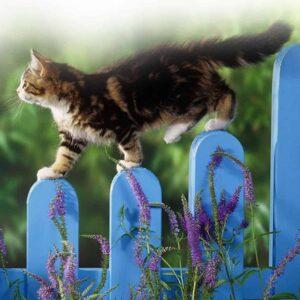 kattenpoot afdruk maken