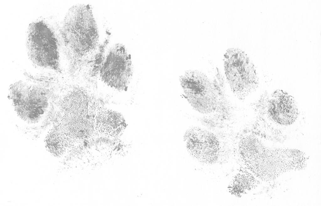 Blijvende herinnering hondenpoot afdruk